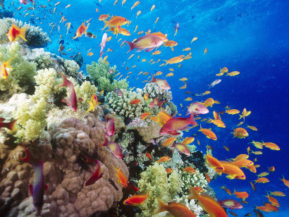 coral reef in the southern red sea